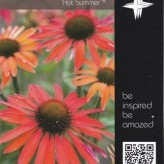 Echinacea 'Hot Summer' ®