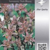 Tricyrtis formosana 'Dark Beauty'