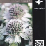 Astrantia major 'Florence' ®