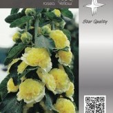 Alcea rosea 'Yellow'