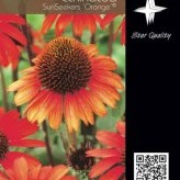 Echinacea SunSeekers 'Orange' ®