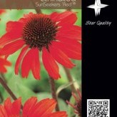 Echinacea SunSeekers 'Red' ®