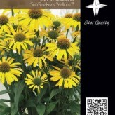 Echinacea SunSeekers 'Yellow' ®