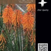 Kniphofia 'Poco Orange' ®