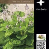 Hosta 'Sum and Substance' ® (X)